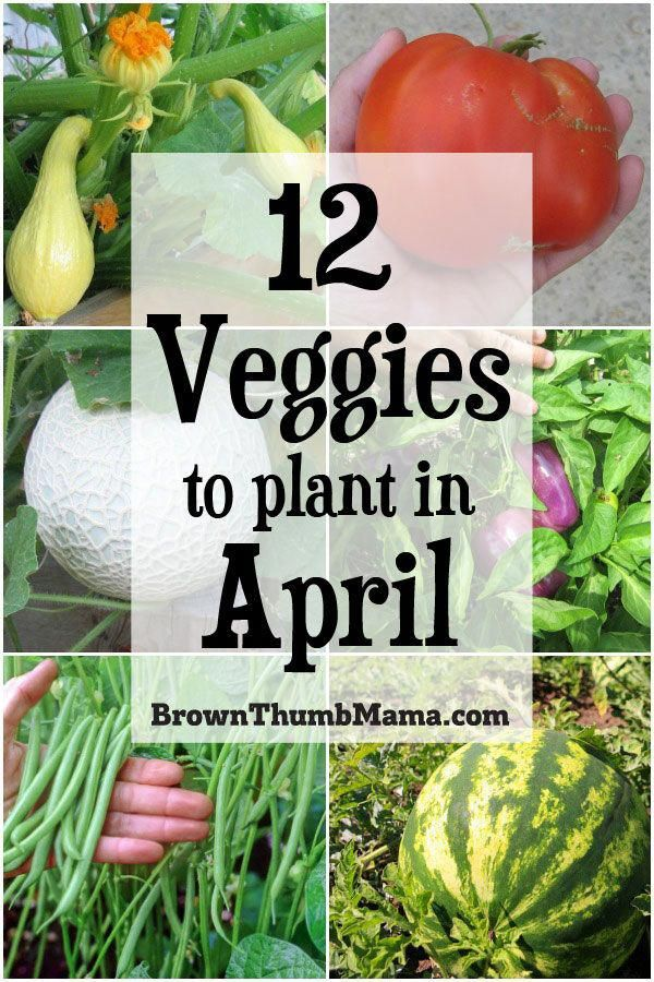 12 Vegetables to Plant in April {Zone 9}