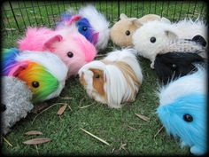 Pin On Guinea Pig Love