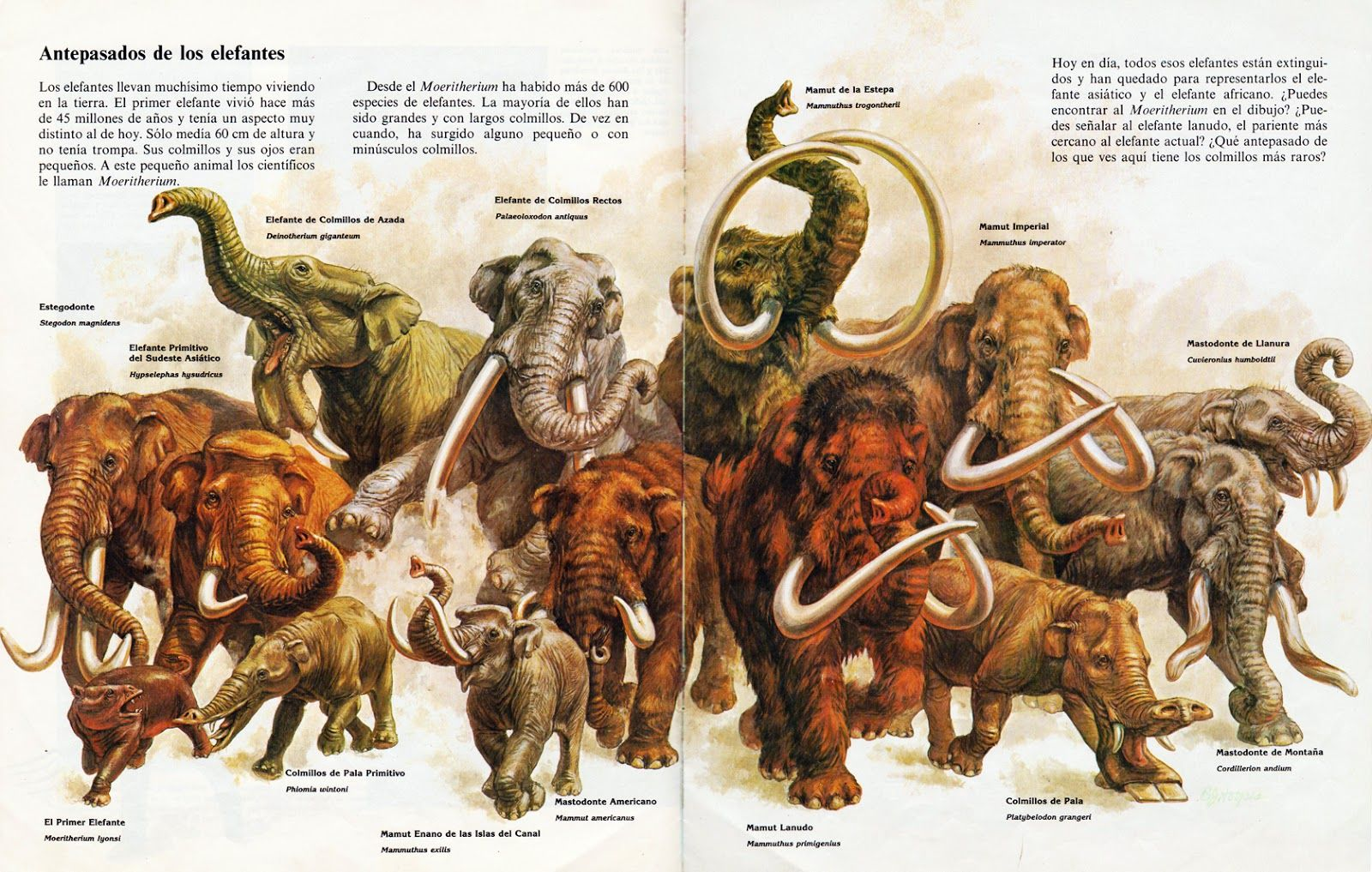 an analysis of the topic of the woolly mammoth Topic: 'life'science woolly'mammoth'vs'elephant woolly'mammoth'and'then'compare'it'to'the'african'elephant,'its.