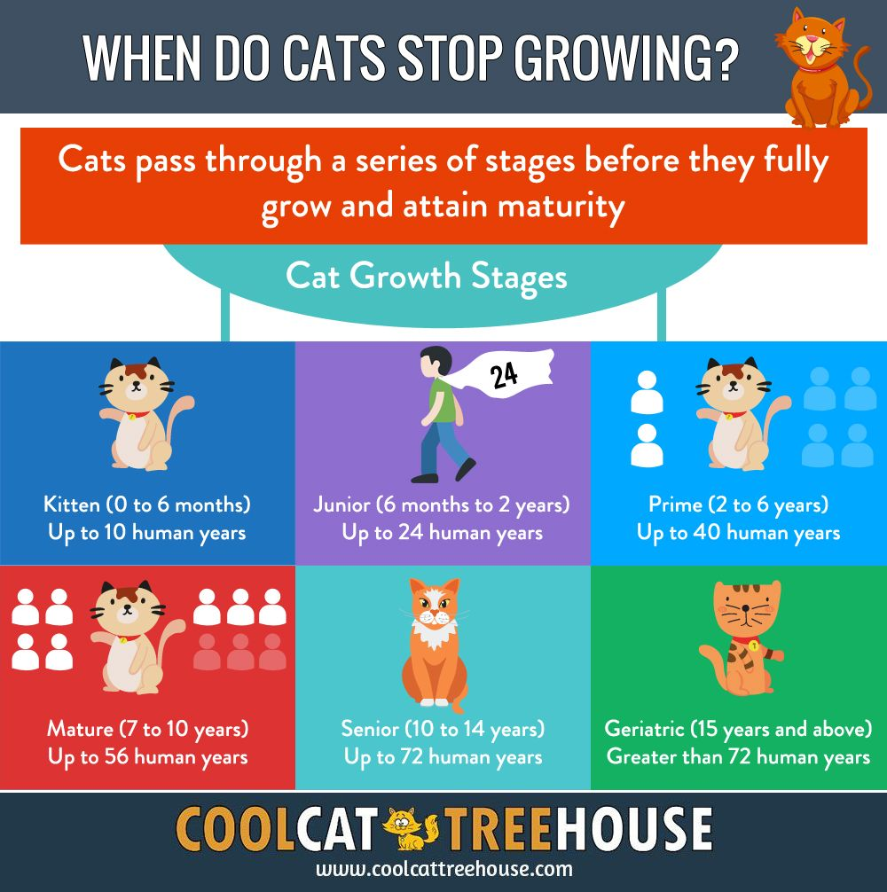 When Do Cats Stop Growing Cool Cat Tree House Cool Cat Trees Pet Care Cats Cat Pictures For Kids