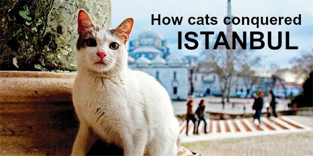 27 weird, wonderful and downright surprising facts about Turkey