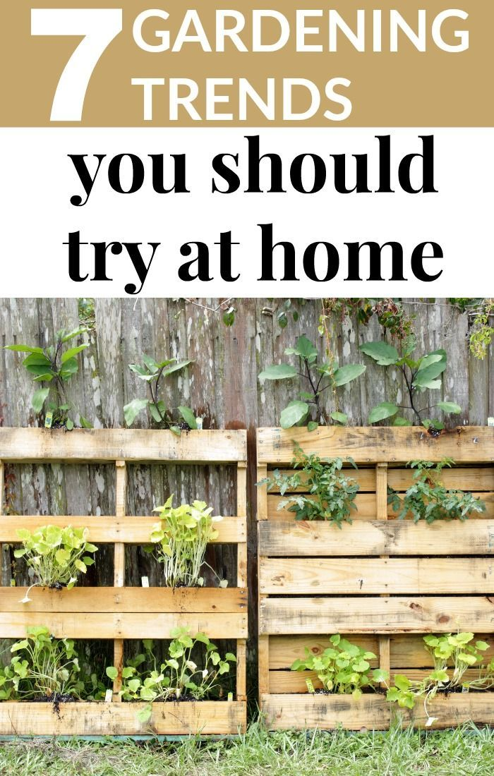 Every year, there are new gardening trends or something old that is gaining in popularity once again. It can make it difficult for you to decide what you should do with your gardens.  7 GARDENING TRENDS YOU SHOULD TRY