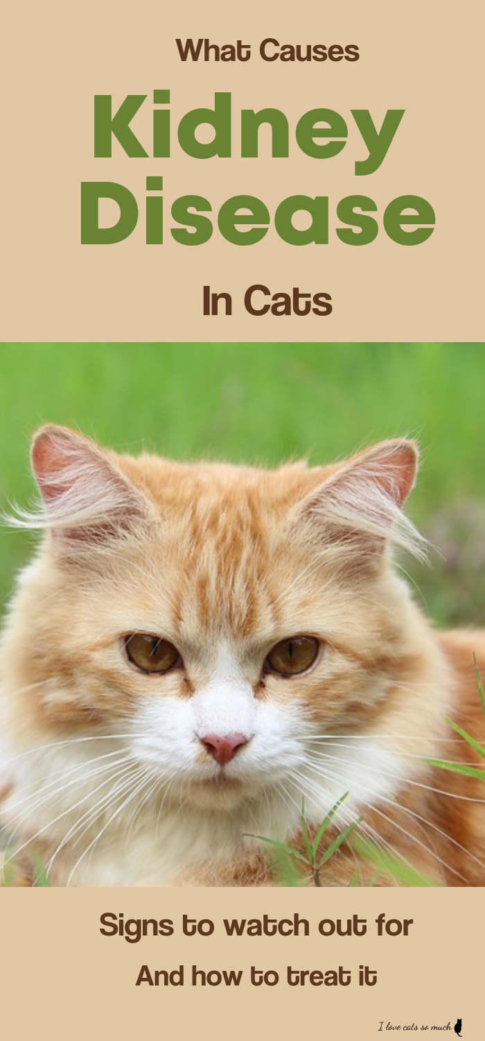 Discover What Causes Kidney Disease In Cats What Are The Signs To Look For And How To Trea Kidney Disease Symptoms Disease Symptoms What Causes Kidney Disease