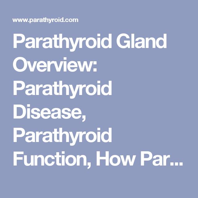 Parathyroid Gland Overview Parathyroid Disease Parathyroid