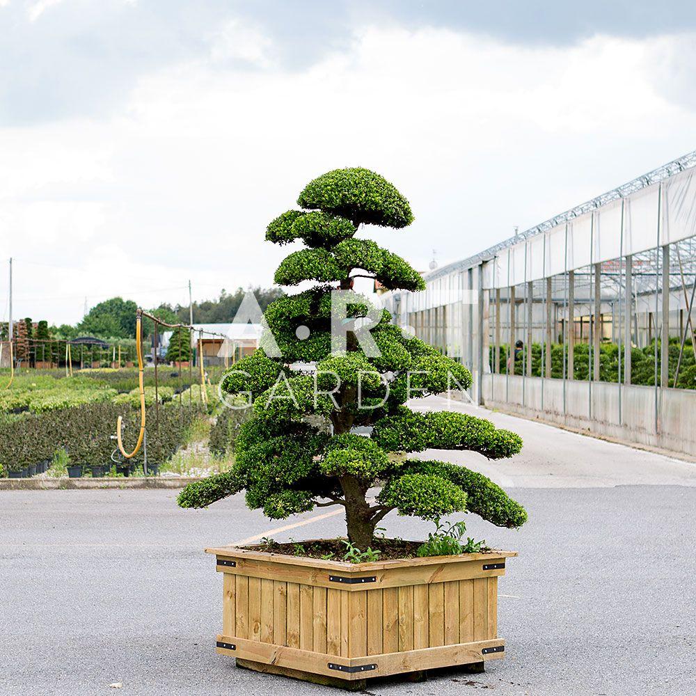 Pot De Fleur Haut Pas Cher arbres nuages pas cher | arbre japonais, idées de jardin