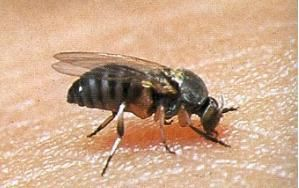 Gnats Are Driving Me Gnuts Flying Up Your Nose Around Our Ears And Biting At Your Arms Will Quickly Drive You Crazy As Soon As You Swat One A With Images