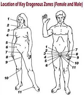 Erogenous zones for females