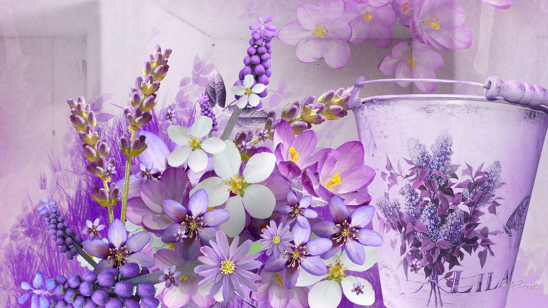 lavenderlovelylavenderhdwallpaper Лавандовые страсти