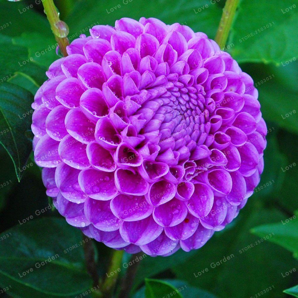 Pin On Beautiful Flowers 1