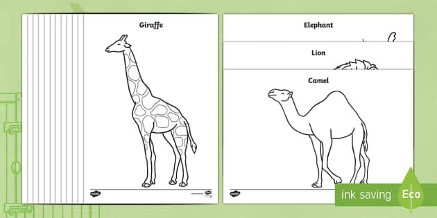 Colouring Sheets To Support Teaching On Dear Zoo Dear Zoo Story Sack Activities
