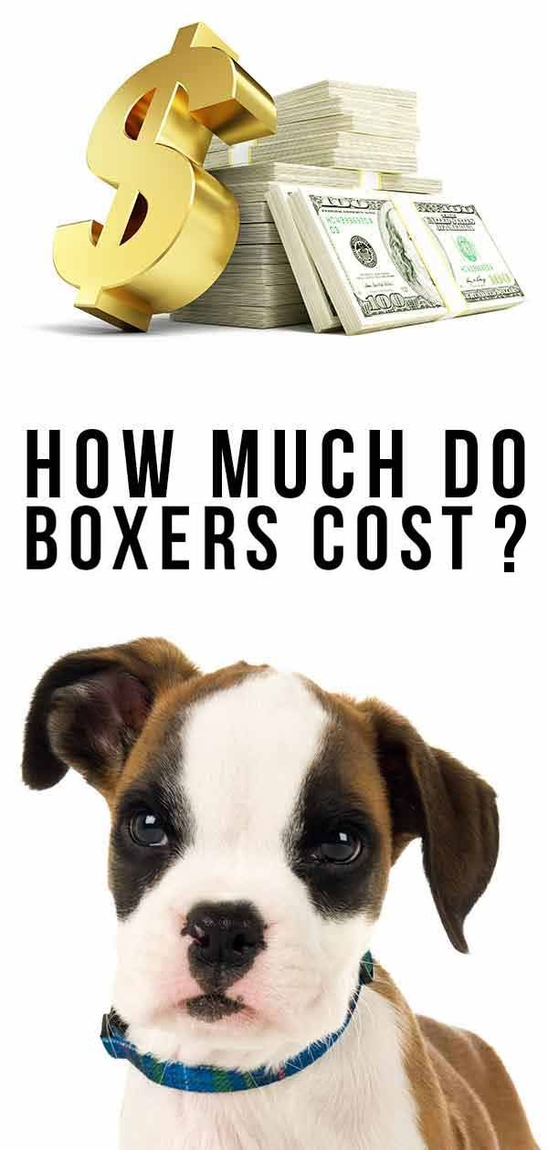 How Much Do Boxers Cost To Buy As Puppies And Raise As