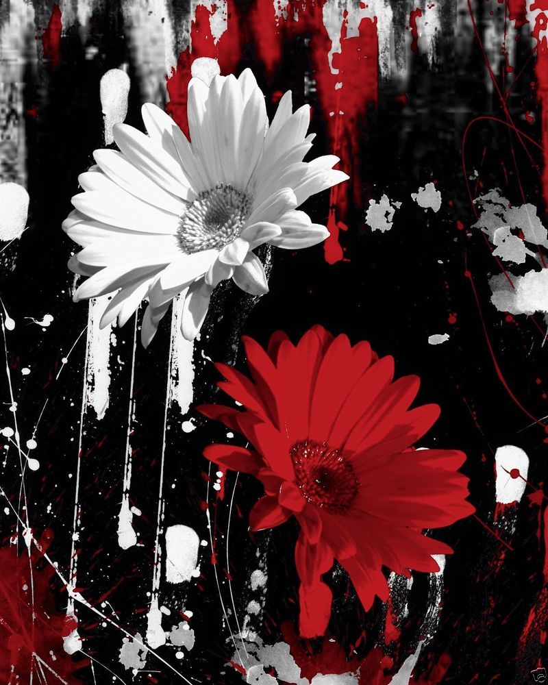 Black white red daisy flowers wall art home decor matted picture