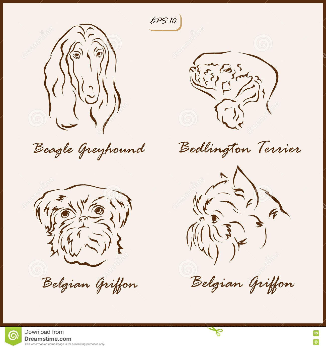 Dog Breeds Set Vector Illustration Shows Beagle Greyhound