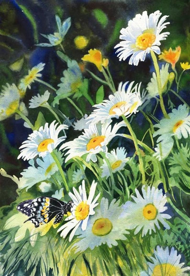 Butterfly Art Flower Daisy Daisies Print or Giclee Floral Art