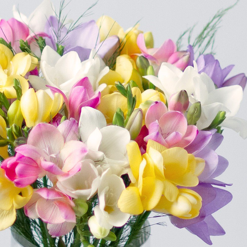 Fragrant Freesias Bunches In 2020 Freesia Flowers Flowers Uk Freesia Bouquet