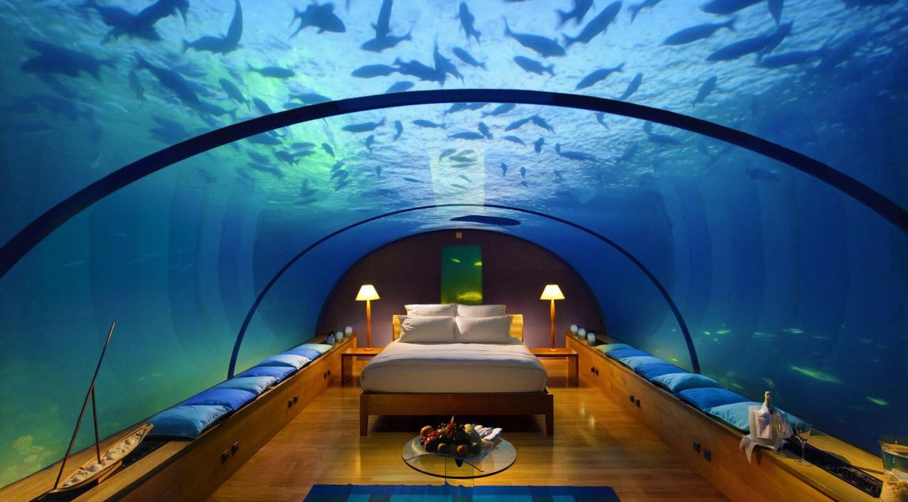 Fish aquarium bed frame - 17 Best Images About This Is So Freakin Crazy Unless You Love Fish Shark Aquarium Underwater Bedroom
