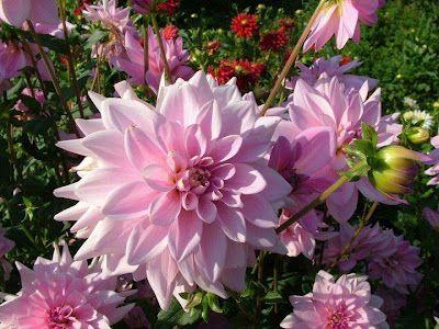 தம ழ கவ த கள தம ழ ப த கவ த Tamil Kavithaigal Tamil Kavithai Tamil Poetry Most Beautiful Flowers Beautiful Flowers Beautiful Flowers Garden