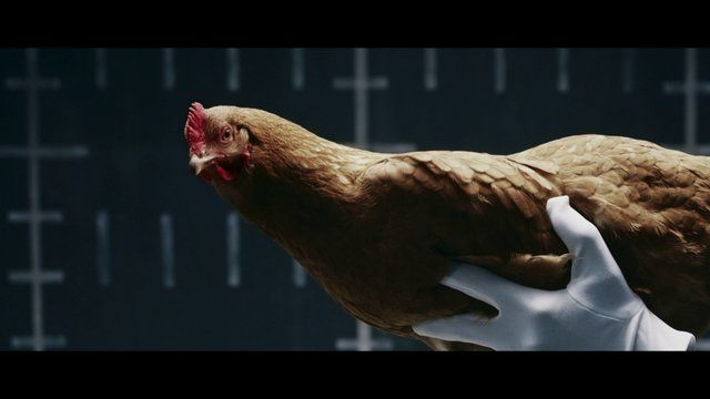 "Mercedes-Benz ""Chicken"" TV commercial, from Jung von Matt"