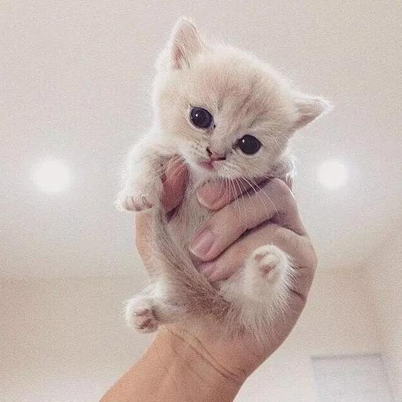 خلفيات قطط كيوت 2019 صور قطط للبنات رائعة 2020 فوتوجرافر Kittens Cutest Baby Cute Animals Cute Baby Animals