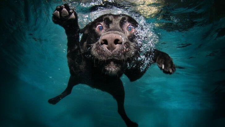 Underwater Dog Wallpaper   Товары для животных, Фото собак ...