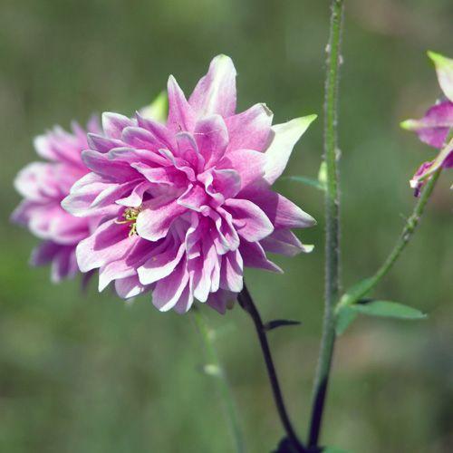 Pin On Garden Flowers I Love
