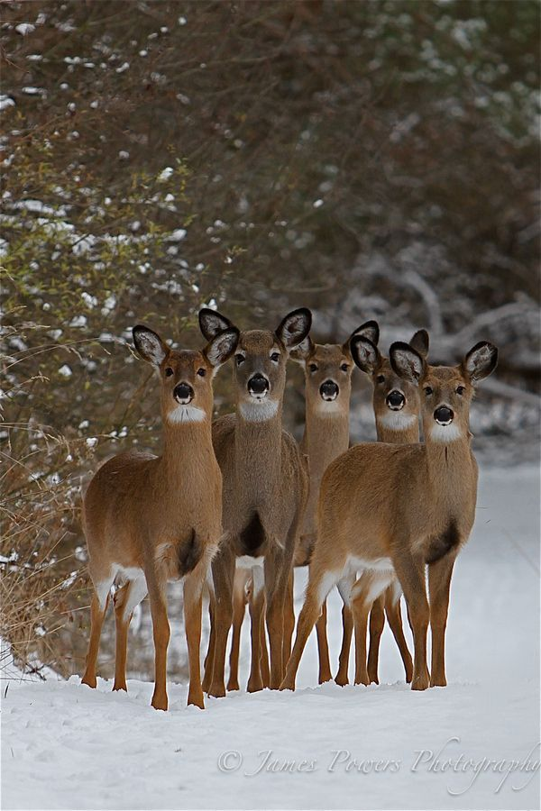 Winter Wildlife by James Powers on Fivehundredpx (via Winter Wildlife | beautiful things)