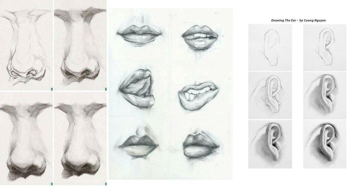 Saber Como Aprender A Dibujar Caras O Rostros Humanos Paso A Paso Es Fundamental Para Todo Buen D Dibujar Rostros Aprender A Dibujar Rostros Aprender A Dibujar