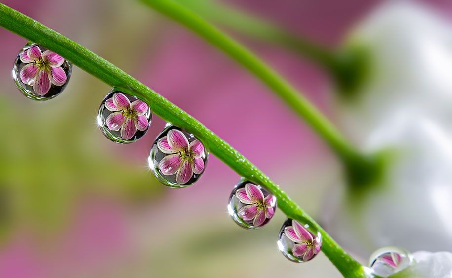 The Innocent And Charming Macro World Captured By Japanese - Amazing images captured tinniest water droplets