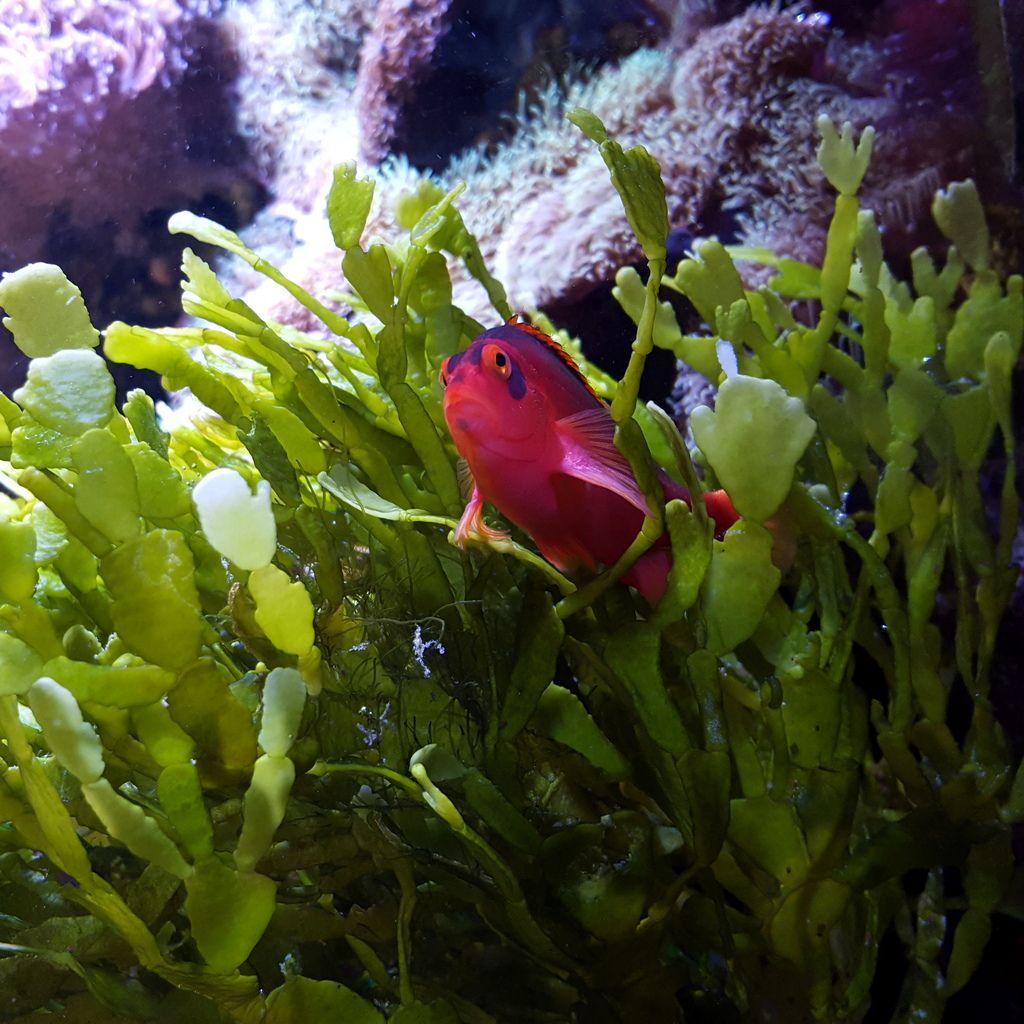 Livealgae green marine plant