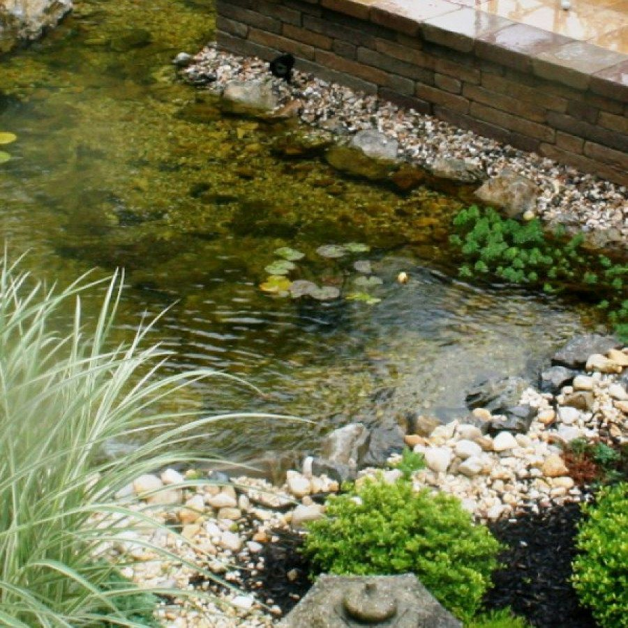 Tips for Building Ponds in Your Backyard | Pond ...