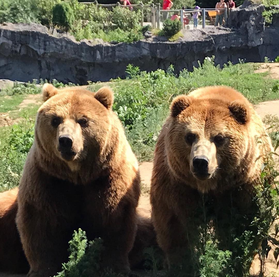 Heute Feiern Jouri Und Kolja Unsere Kamtschatkabarenbruder Ihre 11