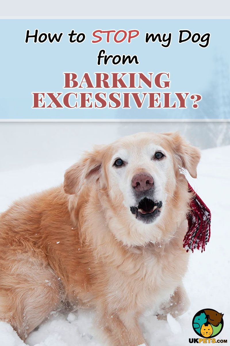 Heres how to stop excessive dog barking dog training