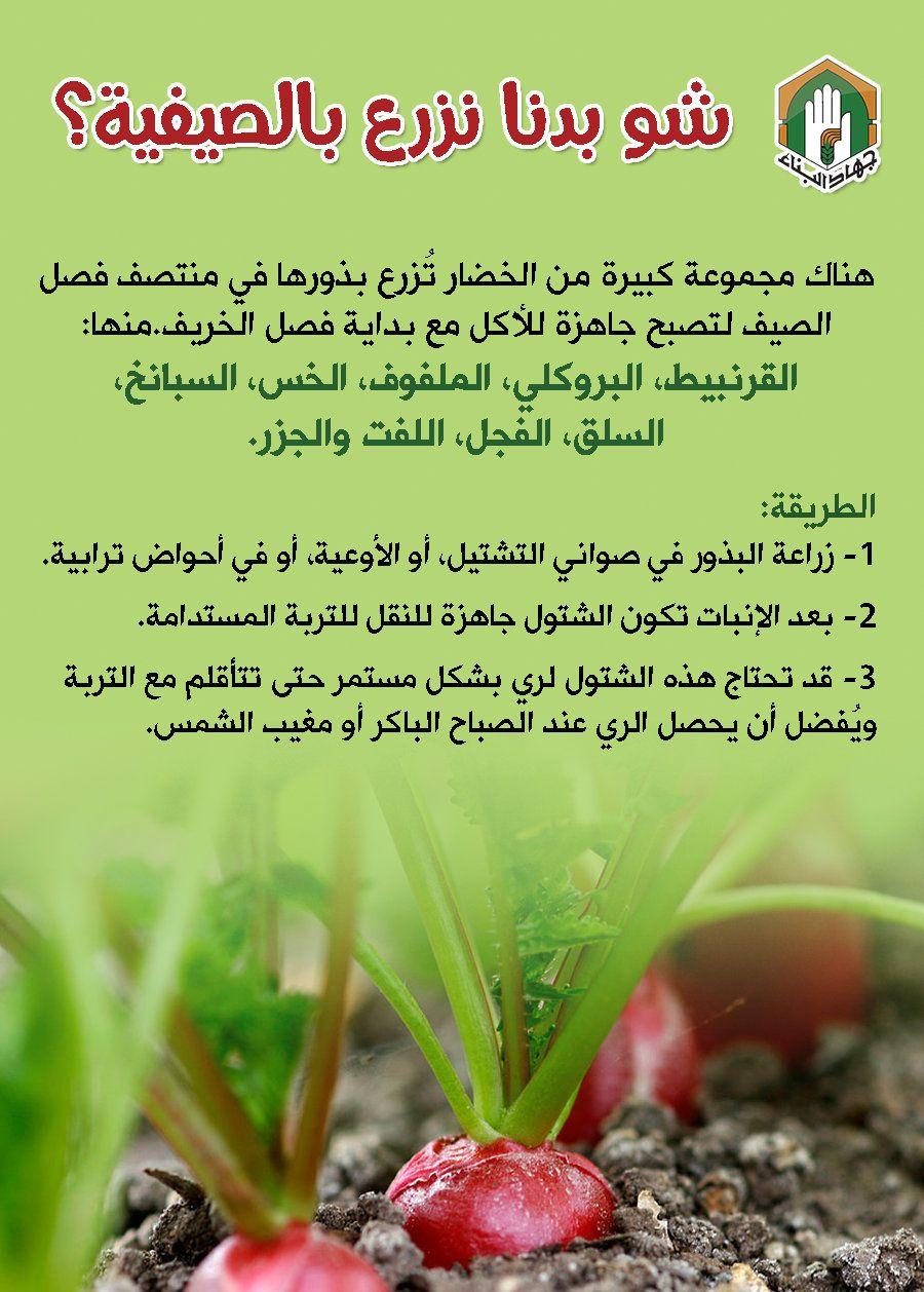 ماذا نزرع في الضيف Diy Plants Agriculture Plants