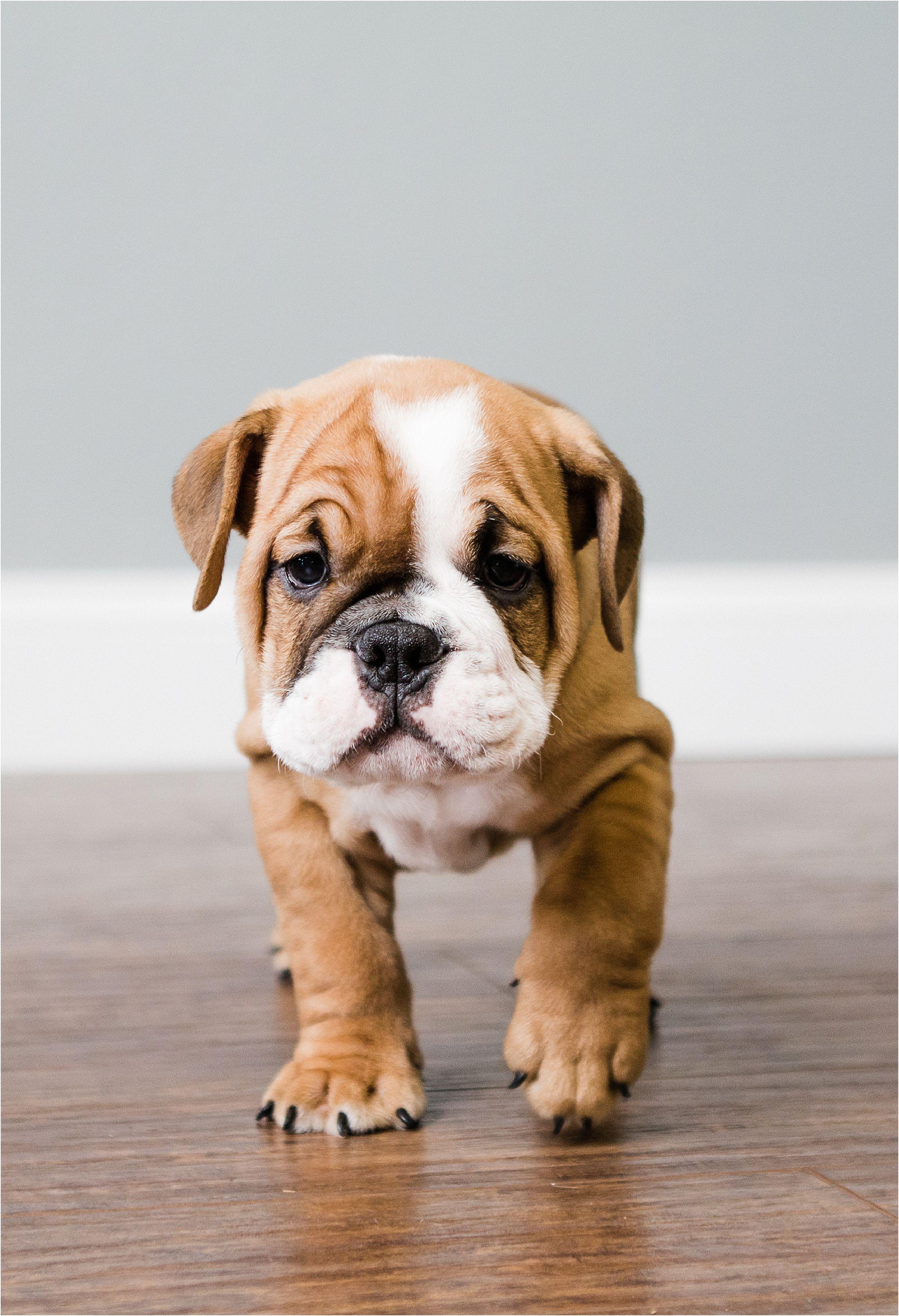 Petsochic Customized Dog Collars And Leashes Petsocchic Com