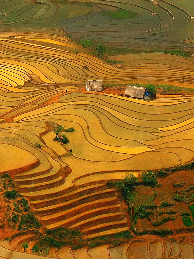 Have you ever witnessed such a stunning landscape like this before? Vietnam #travel - Y Ty Terrace Field.