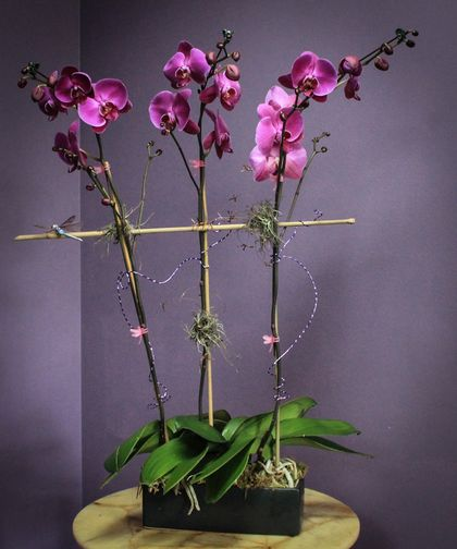 Fairytale Orchids Be Lavished With Beautiful Orchid Blooms As This Triple Plant Garden Creates A Magical And Romantic Gesture Breensflorist Indoorpl Orquideas