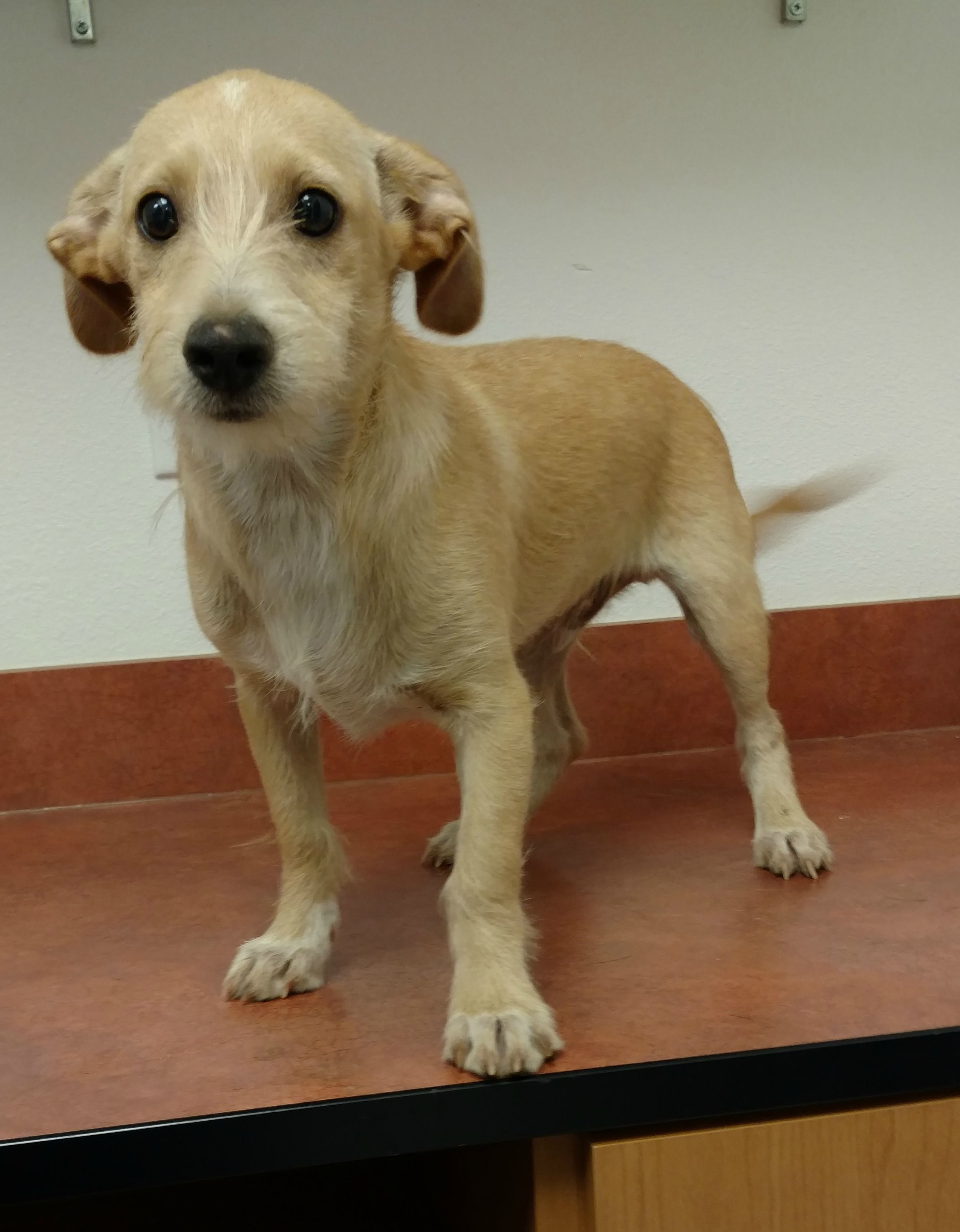 Mason is a social 12 pound 4 month old terrier puppy who s