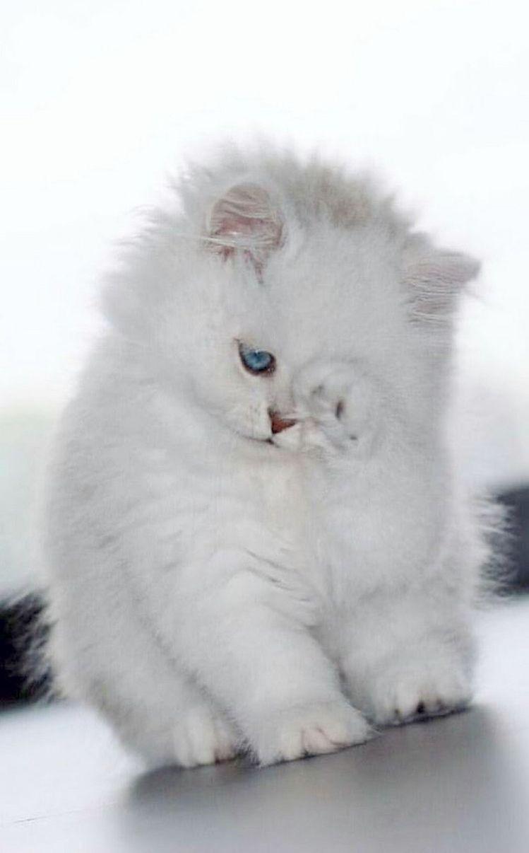 Pin By صورة و كلمة On بسبوس Cat Kittens Cutest Cute Cats Baby Cats