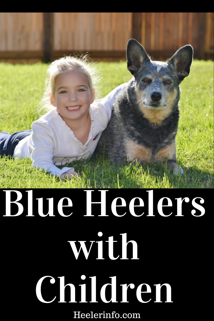 Are Blue Heelers Good With Kids A