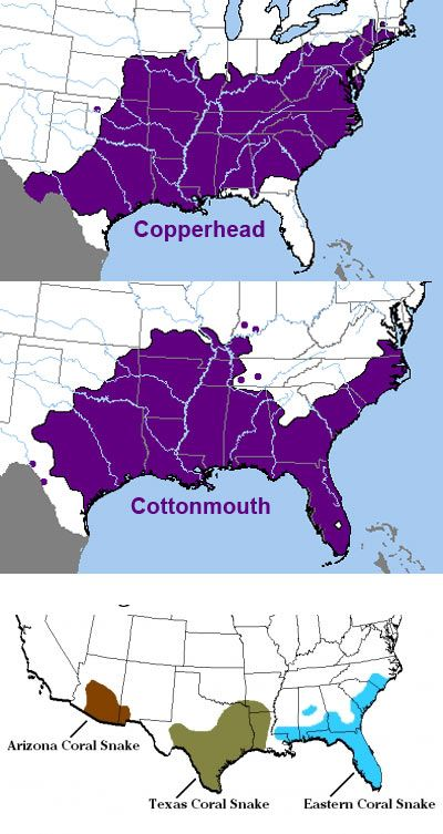 Venomous Snakes In Us Map For your safety, know these 4 poisonous (venomous) snakes, and