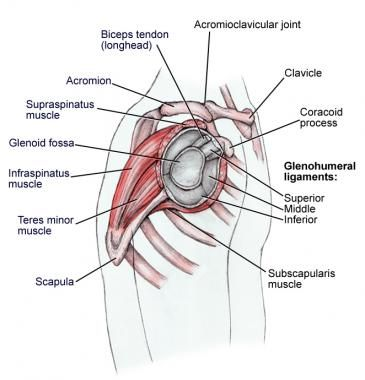 Shoulder anatomy, lateral view. | Fitness | Pinterest | El cuerpo ...