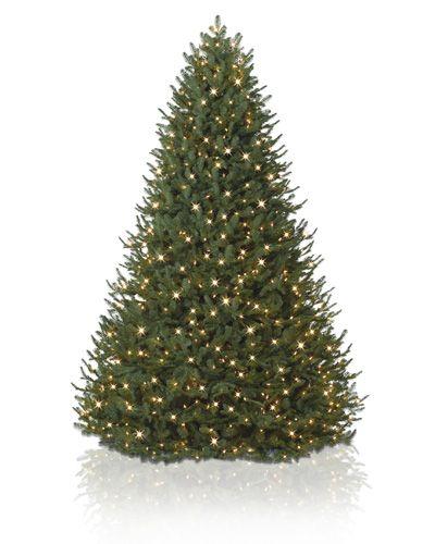 Bh Balsam Fir: BH Balsam Fir™ Tree