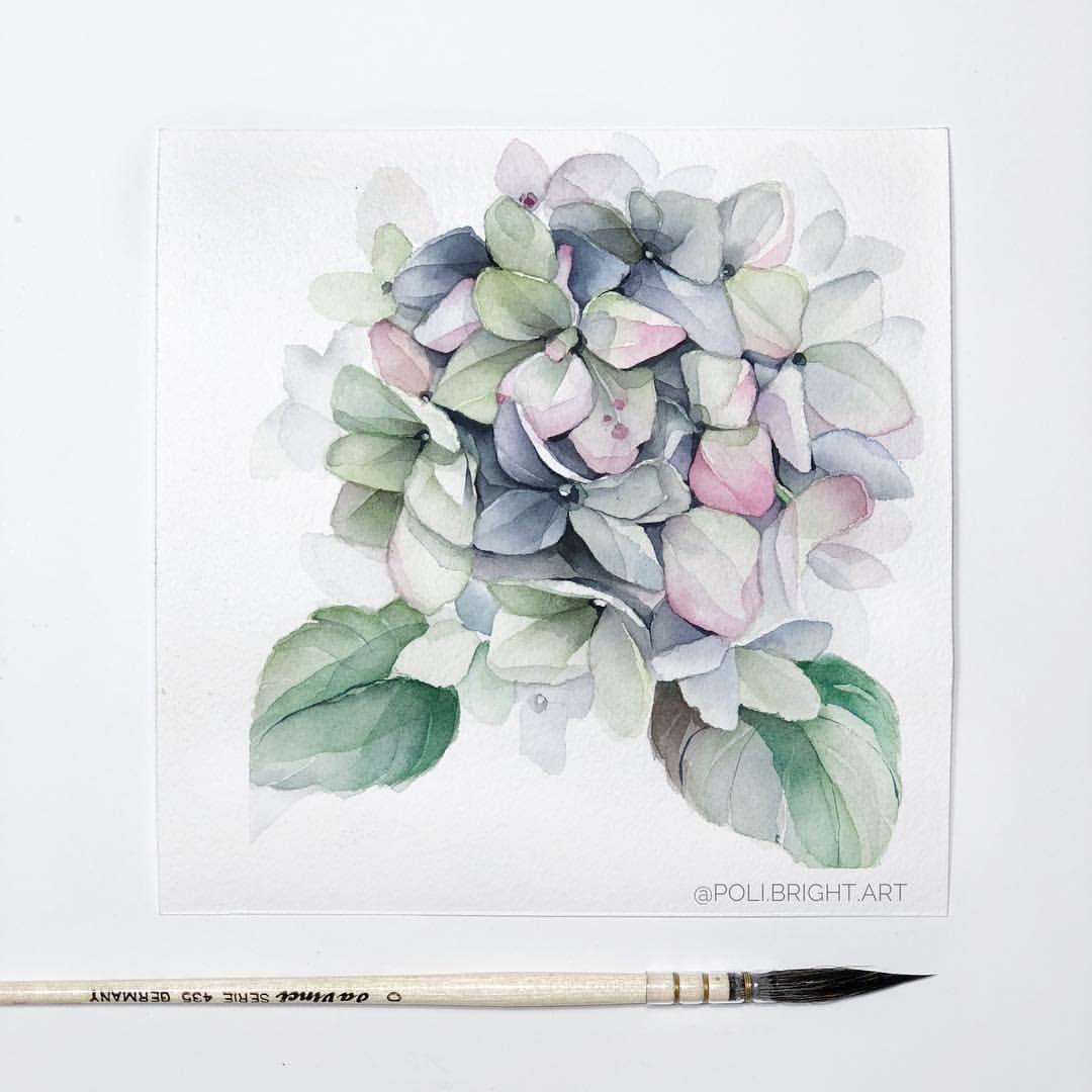 Poli Bright Art In Instagram Hydrangea Art Watercolor Painting
