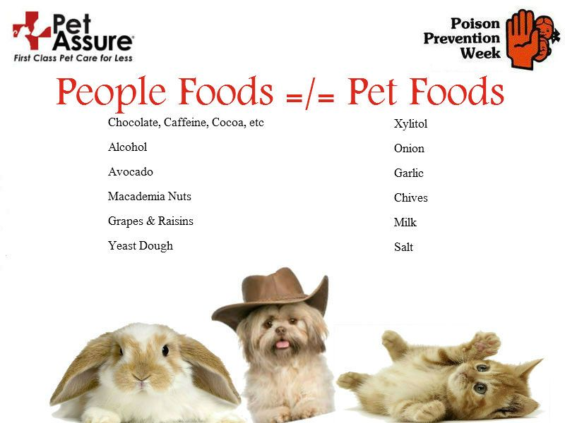 Pets love to share food with us, but not all human foods are safe for pets. Avoid the foods on this list to keep your pets safe! Plus, comment with your pet's favorite food at http://a.petassure.com/1kPv7bk for a chance to win $10 to Amazon.com!