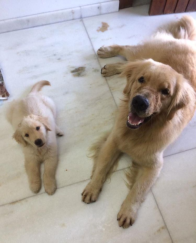 Guess What S This Neglected Golden Retriever Chooses After Being