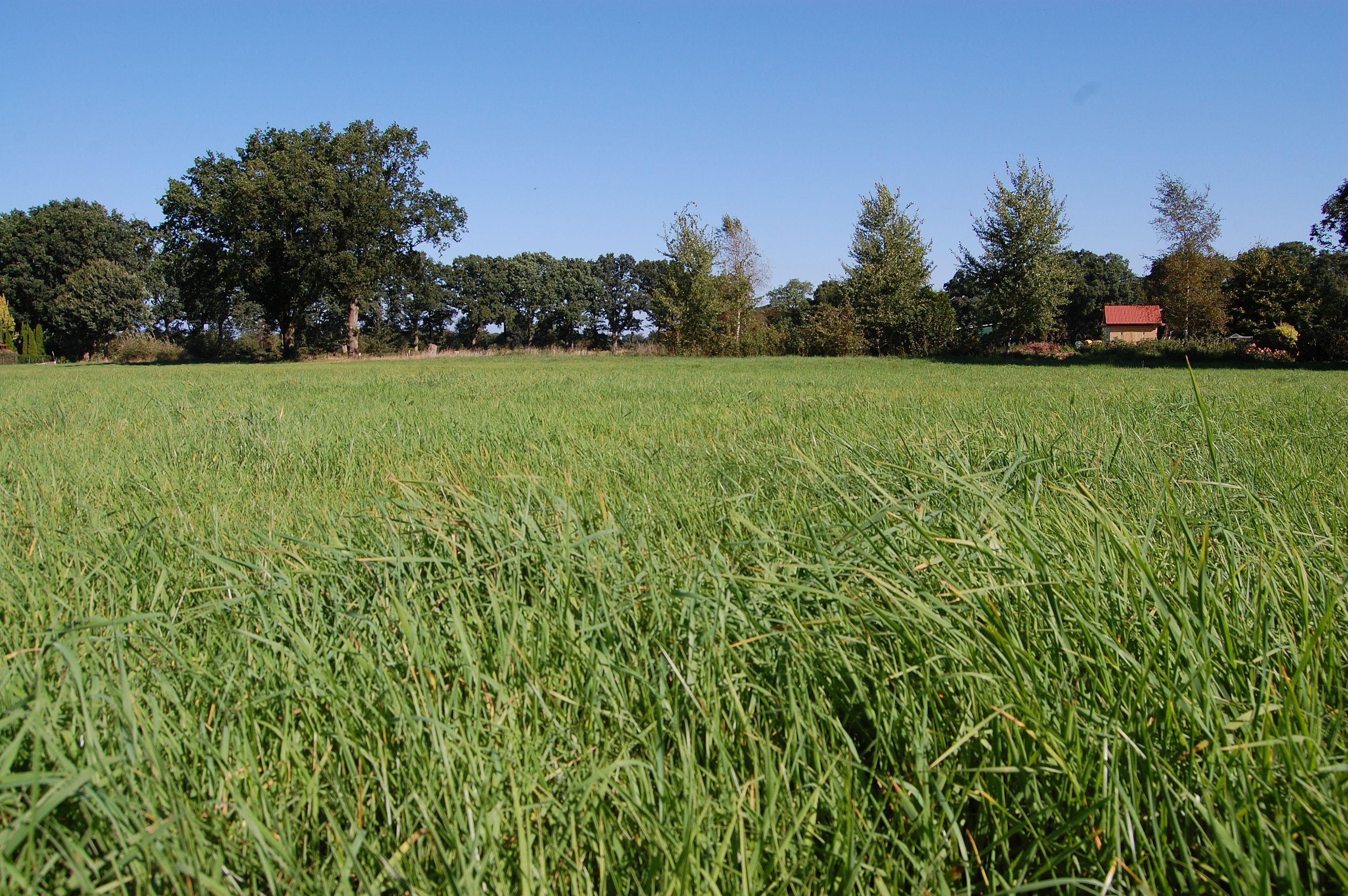 Neues Baugebiet in Offenau: Es geht weiter voran