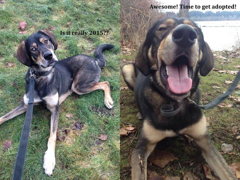 Adoption Page | Adopt & love them!! | Adoption, Pet care
