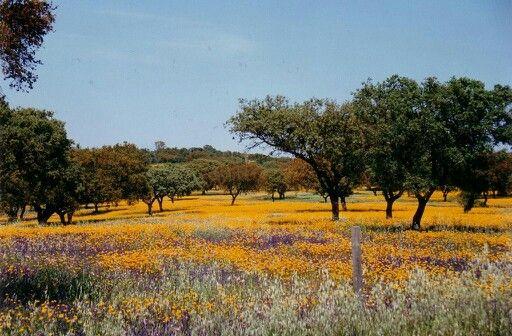 Campos em flor no Alentejo