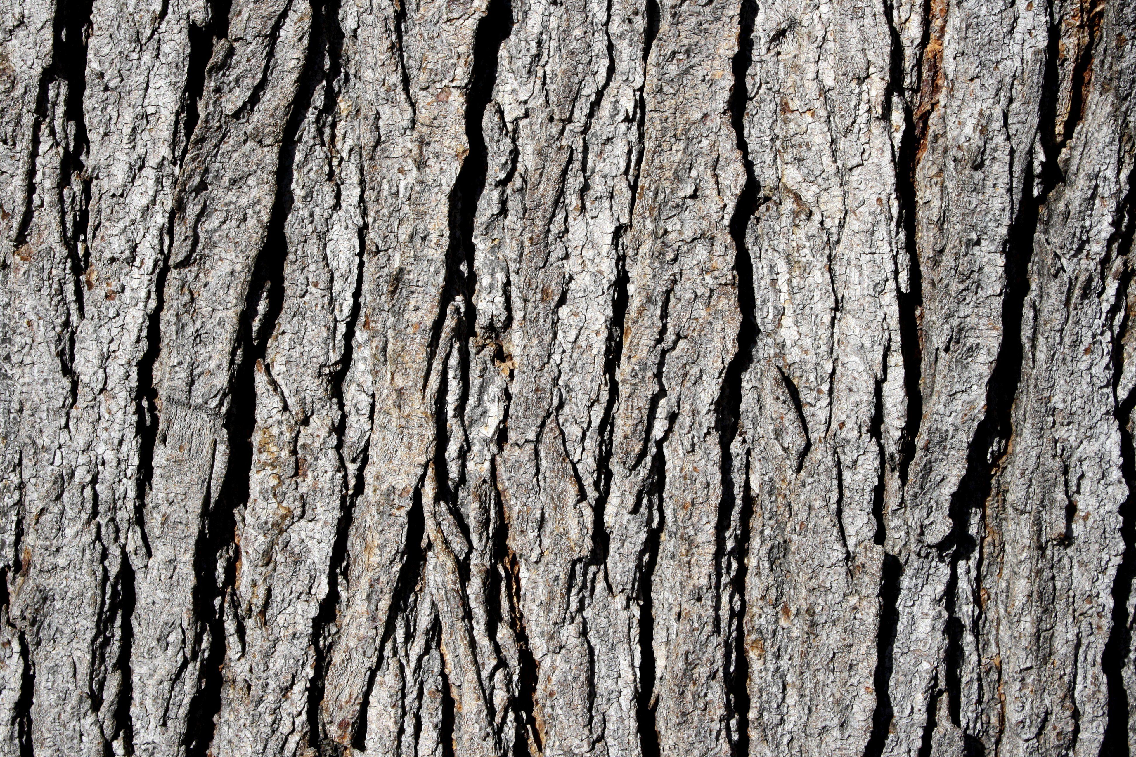 pin by kimberly wies on outdoors tree tree tree