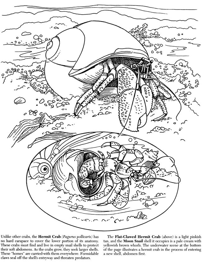 Welcome to Dover Publications | Printables | Pinterest | Motive